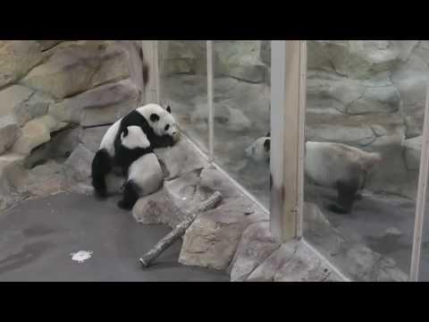 Yuan Meng:moment heureux ユアンモン 至福の時間