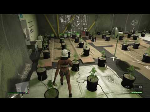 The Goddess: GTA Weed Farm Series (New Plants, Staff and Upgrades)