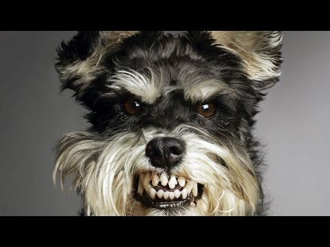 Ultimate Funny Dogs Compilation - Funny Dogs 2016 NEW  # 8