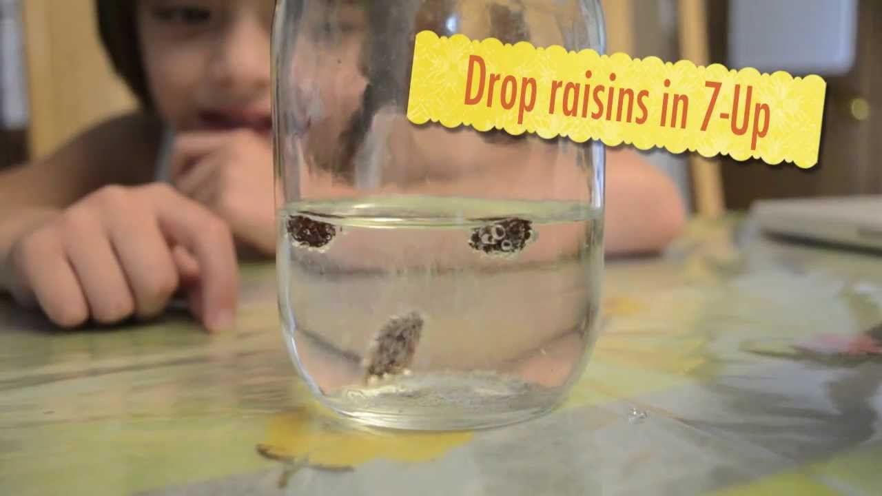 Dancing Raisins 2nd grade science experiment YouTube – Dancing Raisins Worksheet