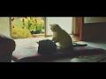 """猫専用の通信講座が登場? 「肩のもみ方」など猫の""""勉強""""姿にキュンキュン 「ユーニャン」Web限定動画「ねこ勉~Cats Learning~」トレーラー"""