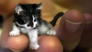Какие кошки самые маленькие в мире?