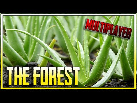 SEZON NA ALOES!    THE FOREST MULTIPLAYER    (z: Bladii)