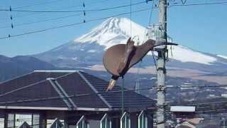 '99にニュージーランドで買ってきたキーウィの玩具。風のある日は我が家...