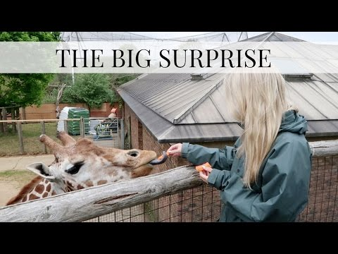 LONDON VLOG, THE BIG SURPRISE! BEING KEEPERS FOR THE DAY AT ZSL LONDON ZOO | Vlog| Scarlett London