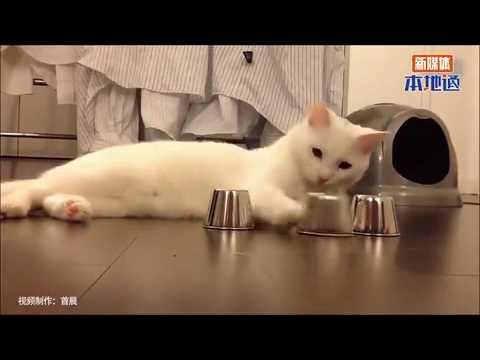 Smart cats