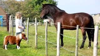 Порода лошади. Мини лошадь.Маленькие красивые,милые животные.