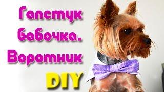 Одежда Для Собак Своими Руками | Галстук Бабочка С Воротником