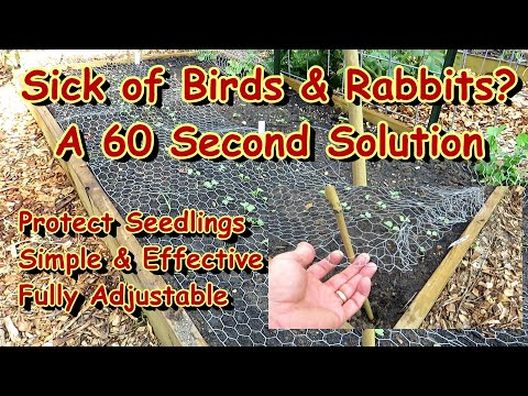 Save Your Garden Seedlings & Transplants from Birds & Rabbits – A Simple & Effective Solutions