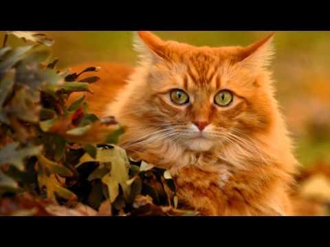 мой рыжий - кот удачи  :)