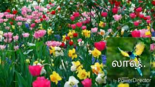 Birthday song In Tamil.பிறந்தநாள் வாழ்த்து பாடல்