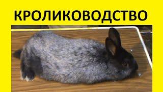 Серебряный кролик, полтавское серебро(, 2016-02-09T23:14:08.000Z)
