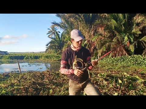 Casting pagi hari pinggiran Danau Tondano di sarang Babon