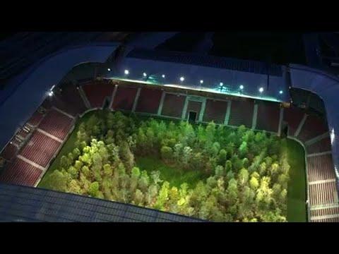Avusturya'da futbol sahası ormana dönüştü
