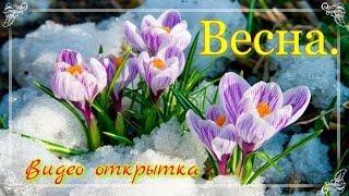 Весна  Видео открытка и лучшее поздравление(Весна. Видео открытка и лучшее поздравление. В первый весенний денечек желаю всем тепла и воодушевления...., 2017-03-01T04:50:20.000Z)