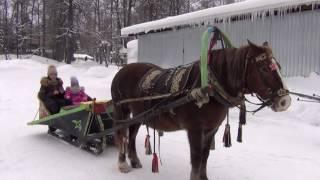 Собаки Хаски  Олаф  Лошадка  Зимние развлечения для детей