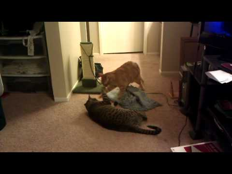 Todd and Copper play fighting