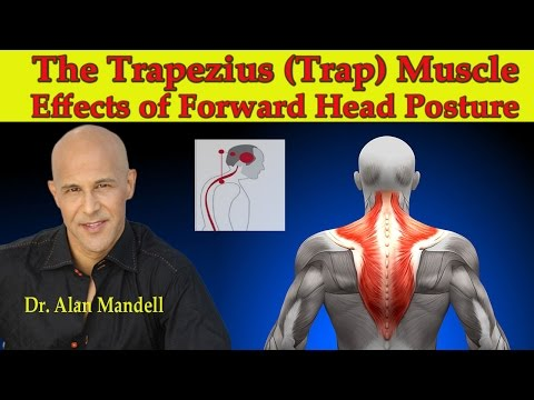 The Trapezius (Trap) Muscle...The Major Effects of Forward Head Posture - Dr Mandell