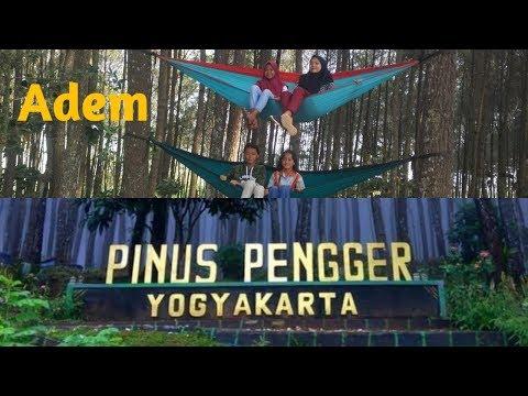 bagas-waras---wisata-hits,-pinus-pengger-jogja
