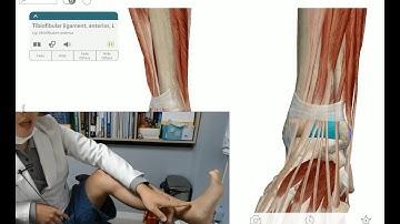 안낫는 발목 통증 혼자서 치료 & 해부학 공부