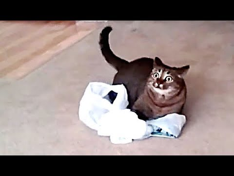 CATS STUCK IN BAG 🛍 | compilation