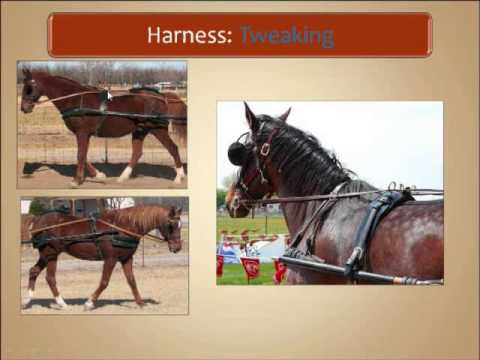 Carriage Driving ADS Webinar Harness and Bits