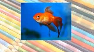Pokoloruj Świat - Nauka Angielskiego dla dzieci - Zwierzęta domowe