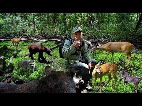 Tim Harrell Big Cypress Trail Camera Pickup
