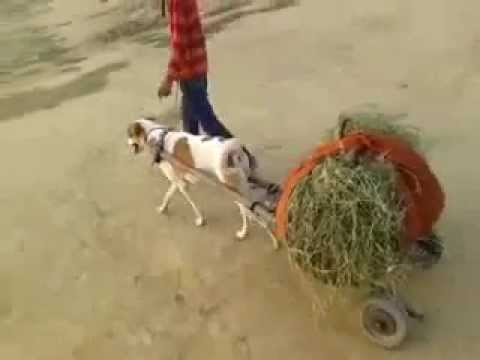 Kutta Gaadi   You Never Seen whatsappvideo net