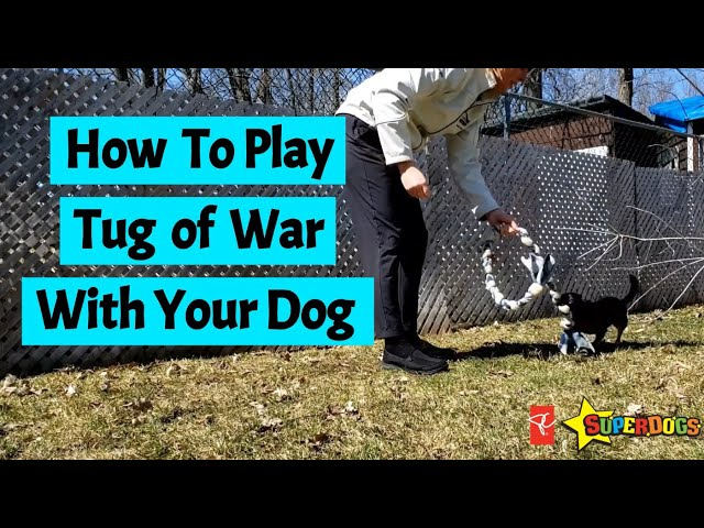 How To Play Tug With Your Dog | Dog Training