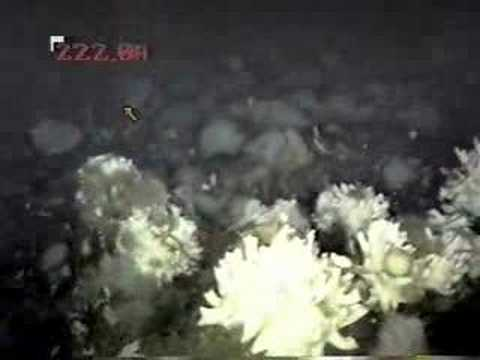 McMurdo Sound Underwater at 200 feet