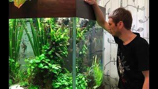 Травник четыре месяца без подмен. Обслуживание аквариума