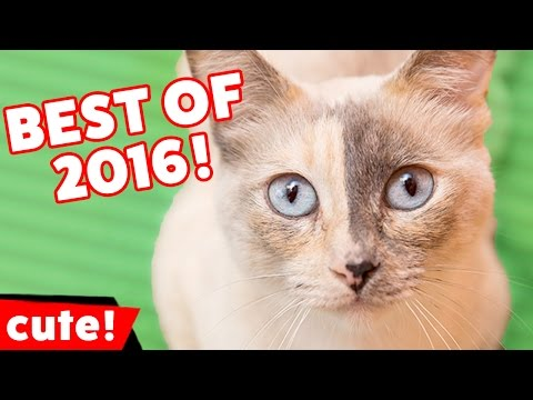 The Funniest Cute Pet & Animal Videos of 2016 | Kyoot Animals