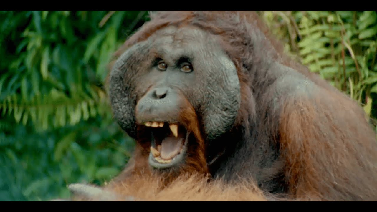 每日酷知識:紅毛猩猩「自己的床自己搭」 - YouTube