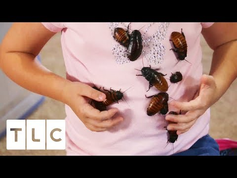 The Girl Who Collects Cockroaches | My Kid's Obsession