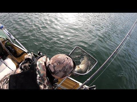 Murray Cod Fishing Blowering Dam Trolling With Peter