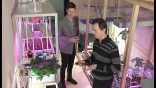 Выращивание витаминной зелени (салат)