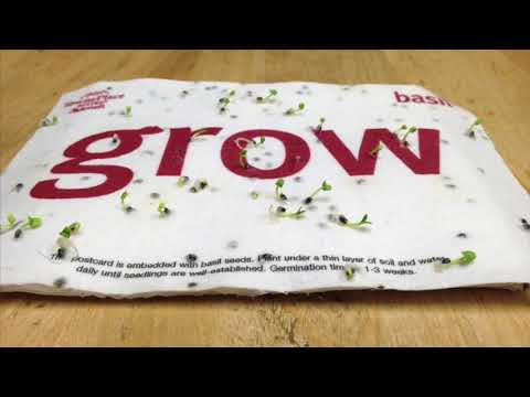 Bloomin Seed Paper