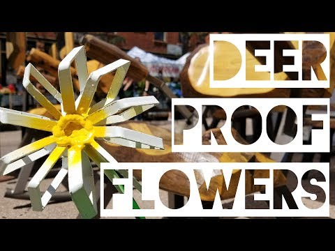 2017 Territory Day's and Deer Proof Flowers