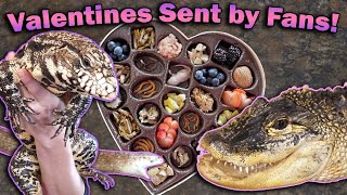 Giving our Reptiles their Valentines!