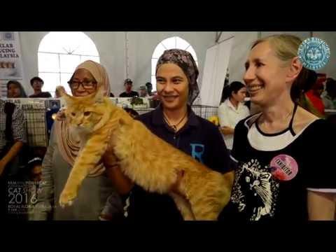 Kelab Kucing Malaysia / Fife / Powercat - International Cat Show 2016 | Royal Floria Putrajaya 2016