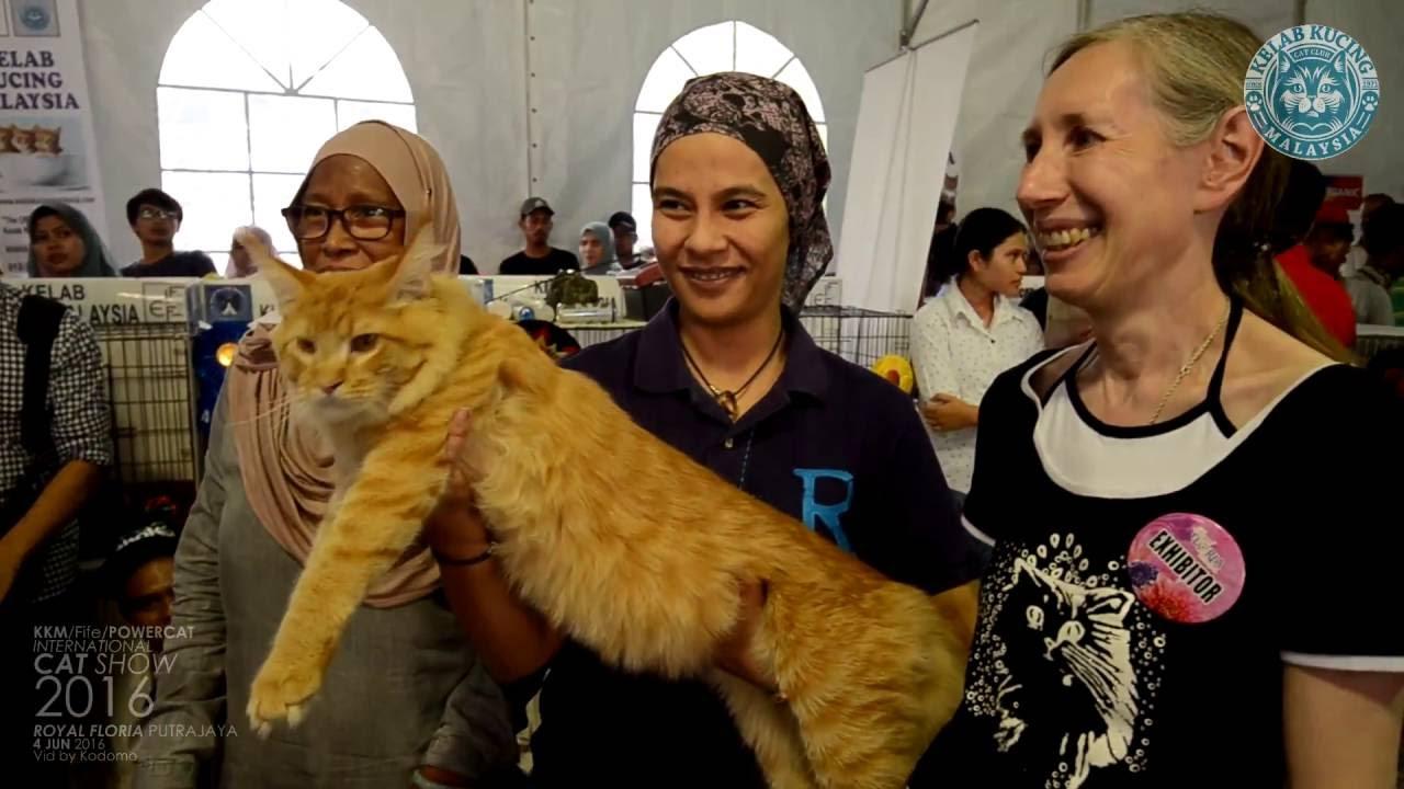 Fife Cat Show