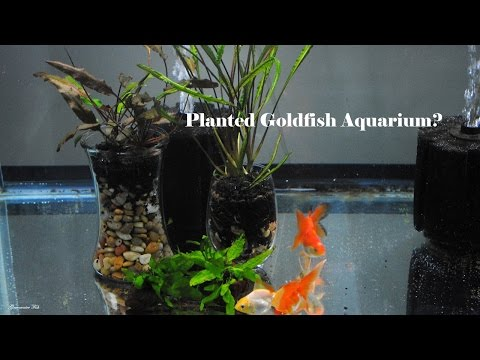 Plants For Goldfish Aquariums