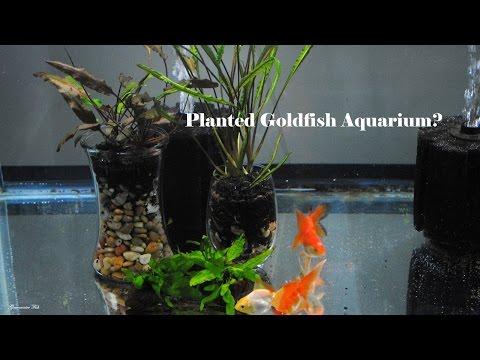 Plants For Goldfish Aquariums
