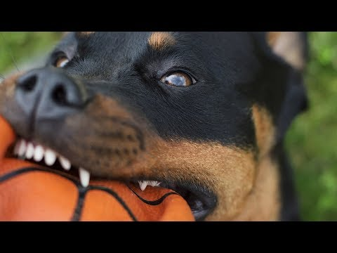 Top Dogs with the Strongest Bite Force