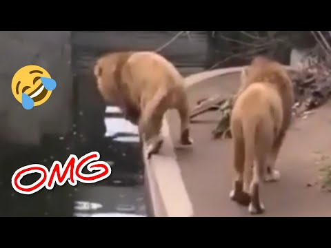 funny-and-cute-puppies-compilation