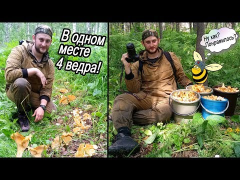 Грибанутый Лесник сходил за лисичками / 15 укусов пчёл!