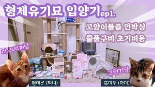유기묘 형제 입양기 ep1. 45만원 FLEX 고양이용…