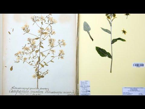 Australie : des plantes rares détruites par erreur par les douanes