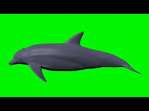3d dolphin green screen effect for chromakey